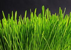 Få en flot græsplæne ved at plante græsfrø