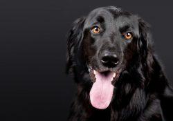 Sund og stærk hund med Kingsmoor hundefoder